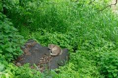 Kattenslaap in de groene struiken royalty-vrije stock afbeelding