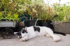 Kattenslaap in de tuin Royalty-vrije Stock Foto