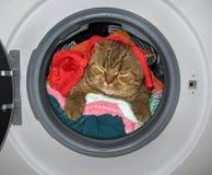 Kattenslaap in de wasmachine royalty-vrije stock afbeelding