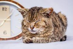 Kattenslaap dichtbij klok De klok toont aan dat het de tijd van ` s te ontwaken A stock foto