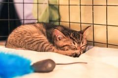 Kattenslaap in een kooi in schuilplaats royalty-vrije stock afbeeldingen