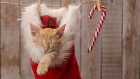 Kattenslaap in een santahoed die bij het drogen van lijn, het slingeren hangen stock video