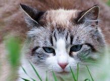 Kattenslaap in gras-portret Stock Foto