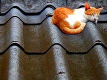 Kattenslaap op dekking royalty-vrije stock foto's