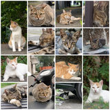 Kattenslaap op een stoel Royalty-vrije Stock Foto's