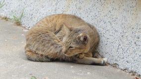 Kattenslaap op gronden stock videobeelden