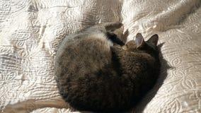 Kattenslaap op het bed stock videobeelden