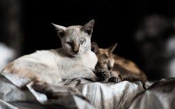 2 kattenslaap op houtskoolzak Royalty-vrije Stock Foto