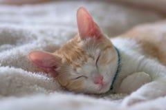 Kattenslaap op wit bed Stock Afbeeldingen