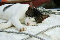 Kattenslaap in scheepswerf openluchthong kong Stock Foto's