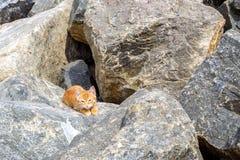Kattenslaap vreedzaam in de zon op een steen op een strand, in zonnige dag royalty-vrije stock afbeelding