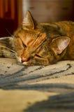 Kattensnuit Royalty-vrije Stock Foto's