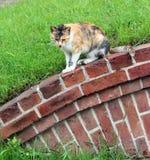 Kattenstarende blik vooruit Stock Foto