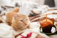 Kattenverjaardag stock fotografie