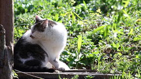 Kattenvideo stock video