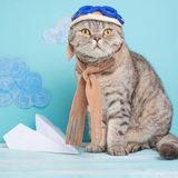 Kattenvliegenier proef, Schotse Whiskas in masker en beschermende brillen proefvliegtuigen Concept de proef, super kat, het vlieg royalty-vrije stock foto