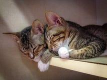 Kattenvrienden Stock Foto's
