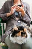 Kattenvrije tijd Stock Afbeeldingen