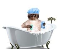 Kattenwassen royalty-vrije stock afbeelding