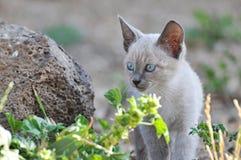 Kattenwelp Stock Foto