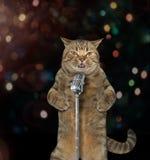 Kattenzanger 1 stock foto