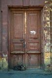 Kattenzitting bij de oude, donkere houten deur Stock Foto