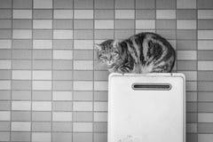 Kattenzitting bovenop een airconditioner Stock Foto's