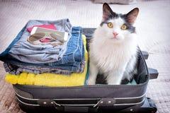 Kattenzitting in de koffer royalty-vrije stock afbeelding