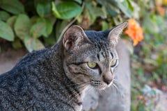 Kattenzitting in de tuin stock afbeelding
