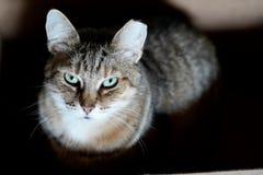 Kattenzitting in doos stock fotografie