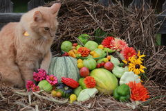 Kattenzitting naast het bloemstuk van groenten en bloemen Royalty-vrije Stock Foto's