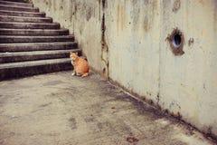 Kattenzitting naast treden in een oude stad Royalty-vrije Stock Fotografie