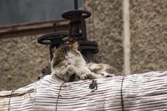 Kattenzitting op de buis Stock Fotografie