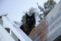 Kattenzitting op de omheining royalty-vrije stock foto's