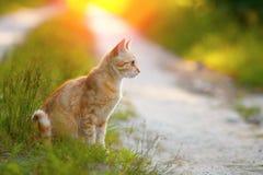 Kattenzitting op de weg royalty-vrije stock foto