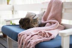Kattenzitting op een bank stock foto