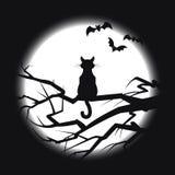 Kattenzitting op een tak, Royalty-vrije Stock Afbeelding