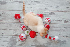 Kattenzitting op GLB boven mening Stock Foto