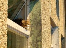 kattenzitting op vensterbank en het kijken aan een venster Stock Foto