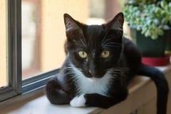 Kattenzitting op venstervensterbank Royalty-vrije Stock Fotografie