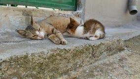 Kattenzuigeling Royalty-vrije Stock Fotografie