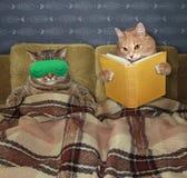 Katter är i säng royaltyfria bilder