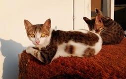 Katter royaltyfri fotografi