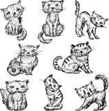 katter Arkivbild