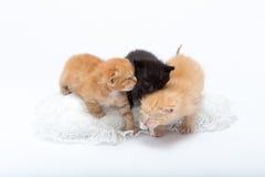 Katter Royaltyfri Bild