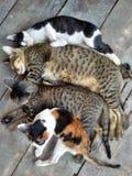Katter Royaltyfria Bilder