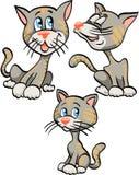 katter Arkivbilder