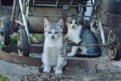 Katter Arkivfoton