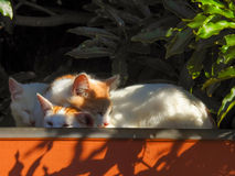 Katter 4 Arkivbild