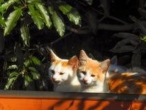 Katter 6 Royaltyfri Fotografi